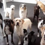 doggydaycare