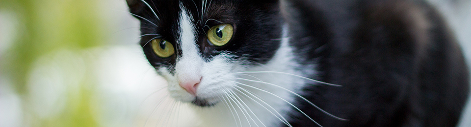 General Image - Cat22